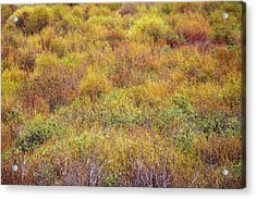 Spring Willows Acrylic Print by Todd Klassy