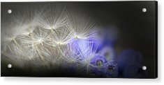 Spring Wishes Acrylic Print by Kim Henderson