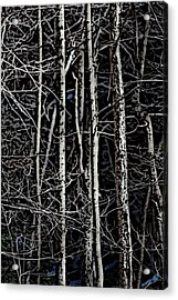 Spring Woods Simulated Woodcut Acrylic Print by David Lane