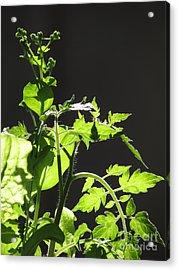 Spring103 Acrylic Print