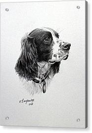 Springer Acrylic Print