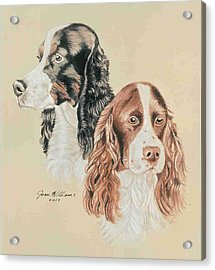 Springer Spaniels Acrylic Print by Joan Williams