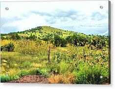 Springerville Sunflowers 0060 Acrylic Print by Sharon Broucek