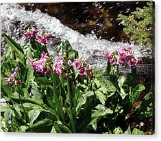 Springflowers Acrylic Print by George Tuffy