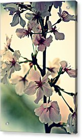 Spring's Delicate Dance Acrylic Print