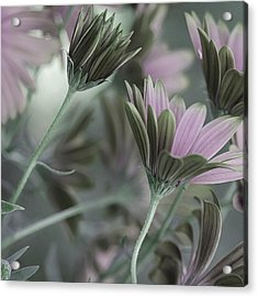 Spring's Glory Acrylic Print