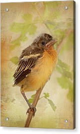 Spring's Sweet Song Acrylic Print