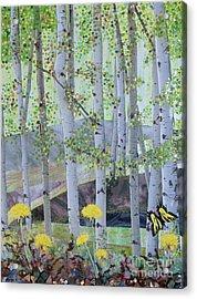 Springtime Aspens Acrylic Print