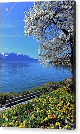 Springtime At Geneva Or Leman Lake, Montreux, Switzerland Acrylic Print by Elenarts - Elena Duvernay photo