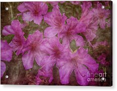 Springtime Beauty Acrylic Print by Judy Hall-Folde