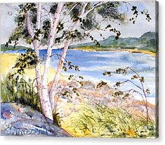 Springtime Birches Acrylic Print