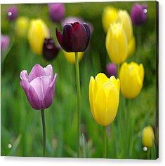 Springtime Glory Acrylic Print by Linda Mishler