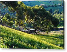 Springtime Glory With Blue Hills Acrylic Print