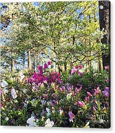 Springtime In Carolina Acrylic Print