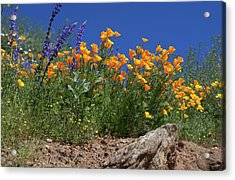 Acrylic Print featuring the photograph Springtime In Southern California by Cliff Wassmann