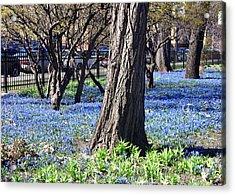 Springtime In The City Acrylic Print