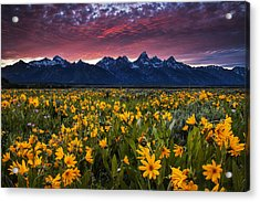 Springtime In The Mountains Acrylic Print by Andrew Soundarajan