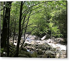 Springtime In The Smoky Mountains Acrylic Print by Barb Montanye Meseroll