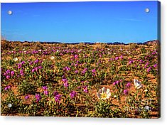 Acrylic Print featuring the photograph Springtime In The Sonoran Desert by Robert Bales