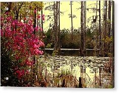 Springtime In The Swamp Acrylic Print by Susanne Van Hulst