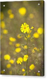 Springtime Acrylic Print by Jim Dohms