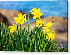 Springtime On The Brae Acrylic Print by Diane Macdonald