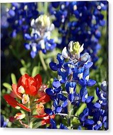 Springtime Texas Colors Acrylic Print by Lynnette Johns