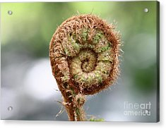 Sprout Of Ferns Acrylic Print by Michal Boubin