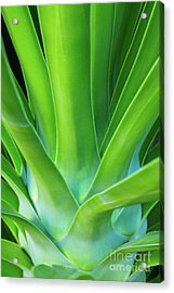 Sprout Acrylic Print by Steven Dillon