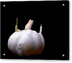 Sprouting Garlic Acrylic Print by Jim DeLillo