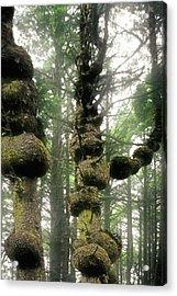 Spruce Burl Olympic National Park Beach 1 Wa Acrylic Print