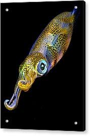 Squid At Night Acrylic Print by Rico Besserdich