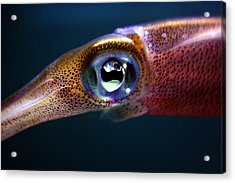 Squid Eye Acrylic Print