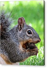 Squirrel 1 Acrylic Print