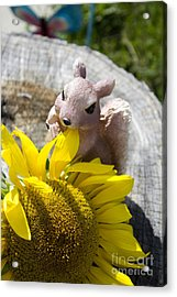 Squirrel And Sun Flower Acrylic Print by Tara Lynn