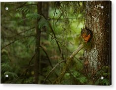 Acrylic Print featuring the photograph Squirrel Breaks The Silence by Lisa Knechtel