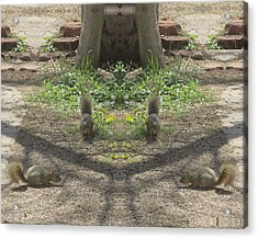Squirrel Buddies Searching For Acorns Acrylic Print
