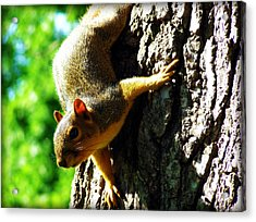 Squirrel Contact Acrylic Print