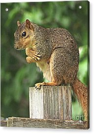 Squirrel Diva - Strike A Pose Acrylic Print