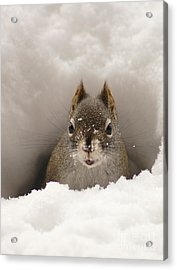 Squirrel In A Snow Tunnel Acrylic Print