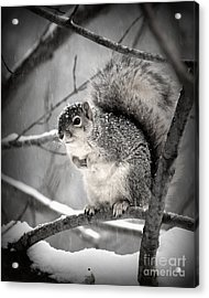 Acrylic Print featuring the photograph Squirrel  In The Maple Tree 2 by Lila Fisher-Wenzel