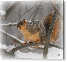 Acrylic Print featuring the photograph Squirrel  In The Maple Tree 3 by Lila Fisher-Wenzel