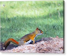Squirrel In The Park Acrylic Print by Jeff Kolker