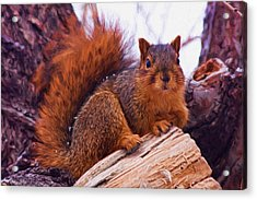 Squirrel In Tree Acrylic Print