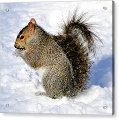 Squirrel In Winter Acrylic Print