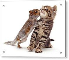 Squirrel Kiss Acrylic Print