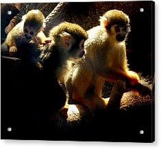 Squirrel Monkey Acrylic Print