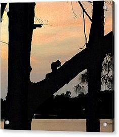 Squirrel On Tree At Sunset Acrylic Print