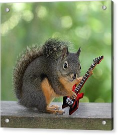 Squirrel Playing Electric Guitar Acrylic Print