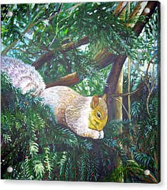 Squirrel Snacking Acrylic Print